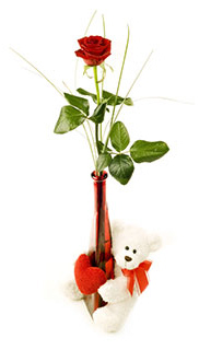 Bear Red Rose